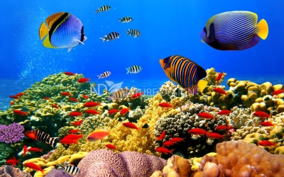 akvariumyi_morskie00176544065akvariumyi_morskie